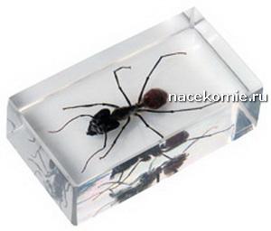 Выпуск №59 Муравей (Mr?wka z rodzaju Camponotus) Насекомые и их знакомые Польская серия