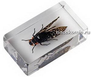 Выпуск №60 Тайская цикада (Cykada z Tajlandii) Насекомые и их знакомые Польская серия