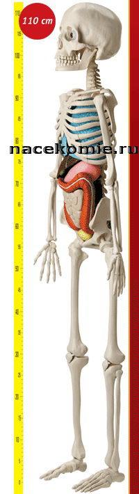 Скелет из польской журнальной серии