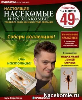 настоящие насекомые и их знакомые 50