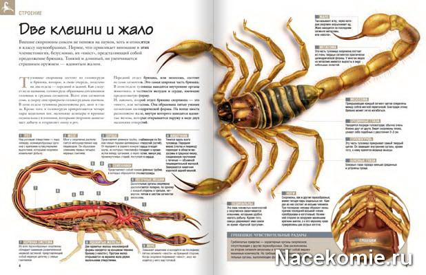 заказать журнал насекомые их знакомые