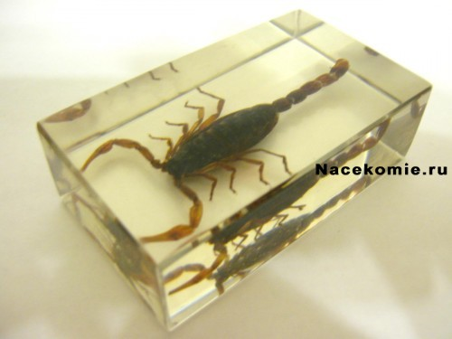 Маньчжурский золотой скорпион из серии Насекомые и их знакомые