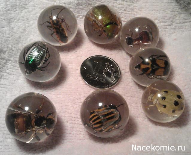 сколько всего насекомых из коллекции насекомые и их знакомые