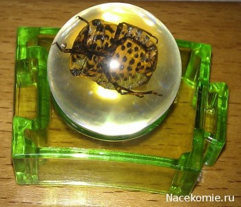Био-Сферы с настоящими насекомыми (Иглмосс)