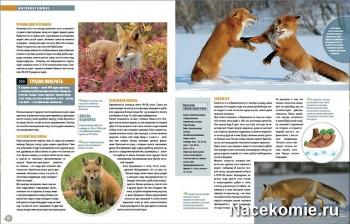 Разворот журнала Наша Флора и Фауна