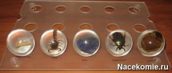 Образцы из первых пяти выпусков коллекции