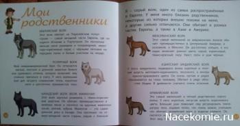 Страницы журнала Животные Леса