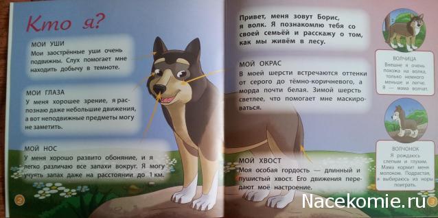 Картинки лесные животные на природе