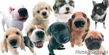 Фото собак снятые широкоугольным объективом