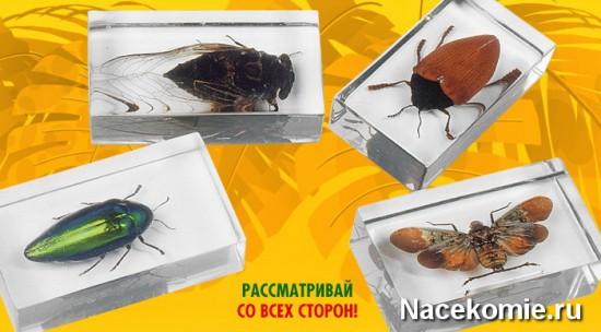 Прозрачные капсулы с насекомыми и ко