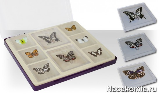Коллекция настоящих бабочек