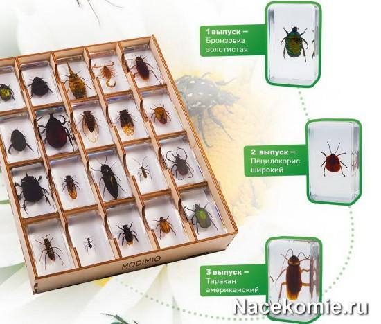 Вложения коллекции - настоящие насекомые в акриловом бруске